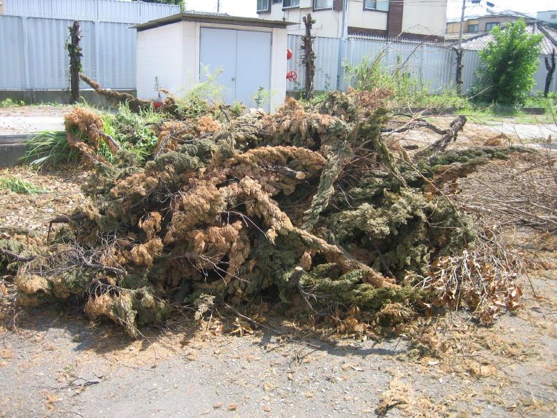 産業廃棄物や産廃の木パレットを破砕処理しチップとしてリサイクル・再利用します。木くずは業種指定もあり処分はお任せください5